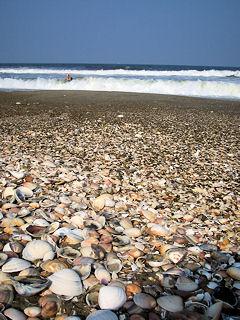 はまぐりの貝殻がたくさん