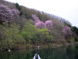 カヌーでおでかけ5・桜