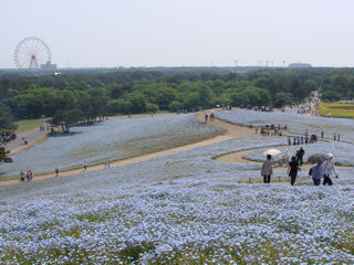 ひたち海浜公園1