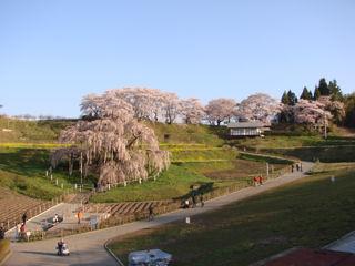 奥の神社の桜も綺麗