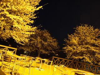 キャンプ場管理棟前の桜