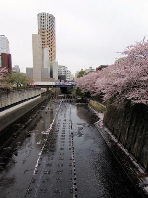 目黒川と船入場調整池