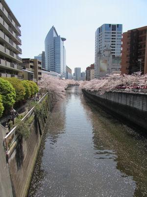 目黒川下流