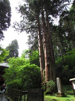 森の巨人たち百選・三本杉