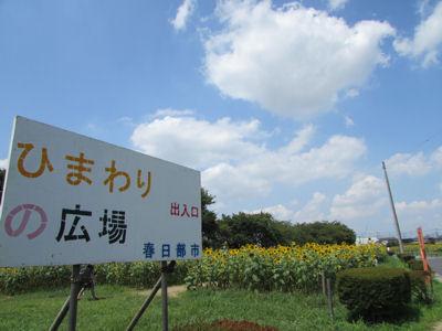 牛島古川公園II期ひまわりの広場